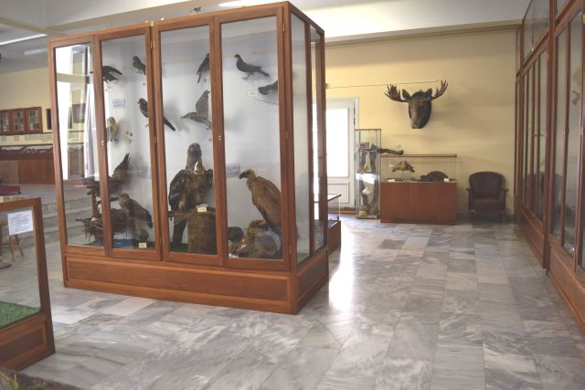Καλωσήλθατε στον ιστότοπο τού Μουσείου Φυσικής Ιστορίας στο Αρσάκειο Ψυχικού 64ce235e7d2